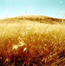 dry grassy hill 3